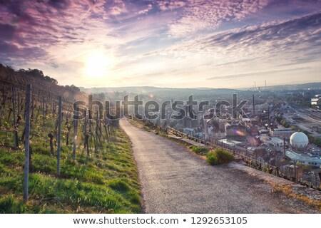 Németország · bor · természet · háttér · élet · szőlő - stock fotó © hideomi