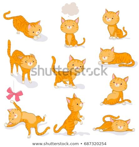 Сток-фото: котенка · Постоянный · играет · белый · Cute · оранжевый