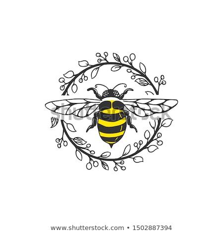 Stockfoto: Honing · natuur · geneeskunde · werken · goud