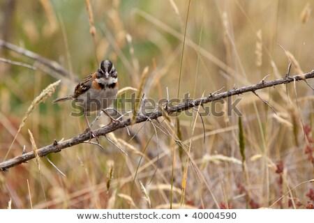 Serçe doğa yaprak kuş şube Stok fotoğraf © rhamm
