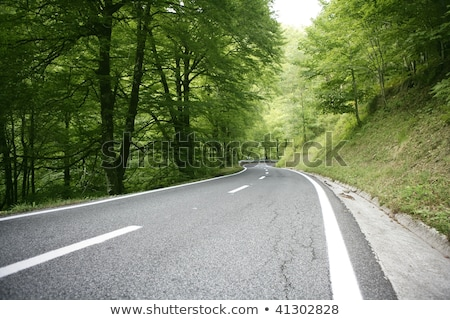 Asphalt winding curve road in a beech forest Stock photo © aetb