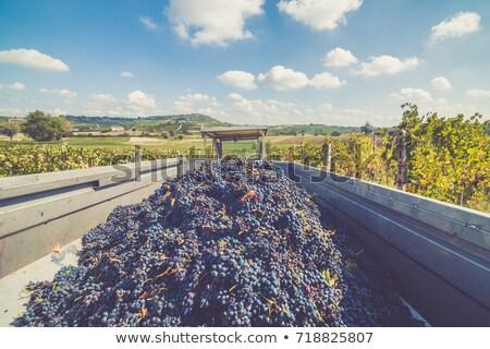 Grape harvester truck stock photo © ABBPhoto