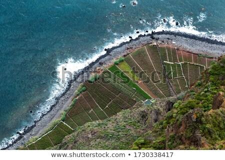 Madeira evler Portekiz Bina doğa Stok fotoğraf © dinozzaver