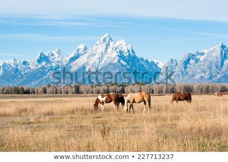 The horses on the Wyoming farm Stock photo © CaptureLight