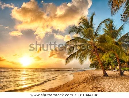 美しい カリビアン ビーチ 手のひら 海岸線 夏 ストックフォト © Bertl123