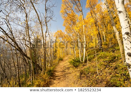 Forest and lake during autumn Stock photo © leungchopan