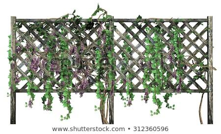 緑 · ブドウ · ブドウ · フェンス · 暗い - ストックフォト © shanemaritch