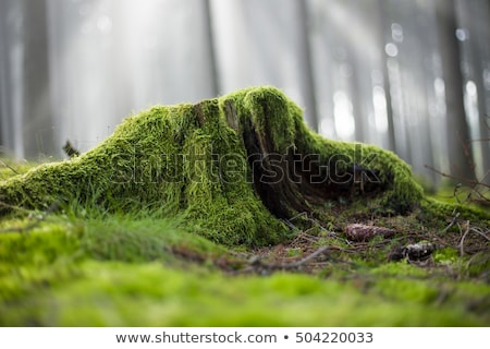 stump of tree with moss in forest stock photo © meinzahn