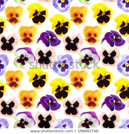 Seamless pattern of pansyes flowers Stock photo © boroda