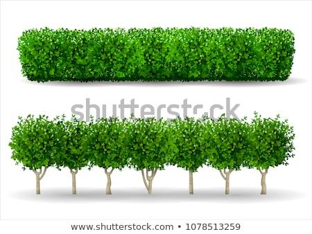 Landscape Gardener Planting Hedge Stock photo © HighwayStarz