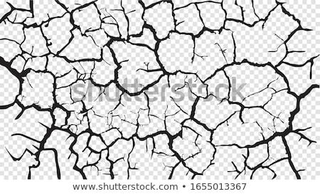 secas · rachado · terra · verde · planta · crescente - foto stock © meinzahn