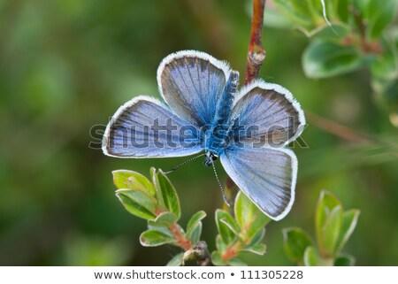 Blu ritratto studio parco animale bella Foto d'archivio © t3rmiit