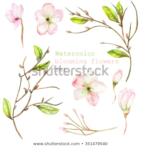 watercolor apple flowers wreath stock photo © elmiko