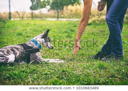 woman trains dog Stock photo © adrenalina
