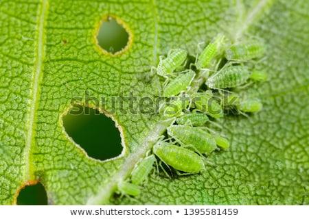 Groene foto klein steeg natuur zomer Stockfoto © Nneirda