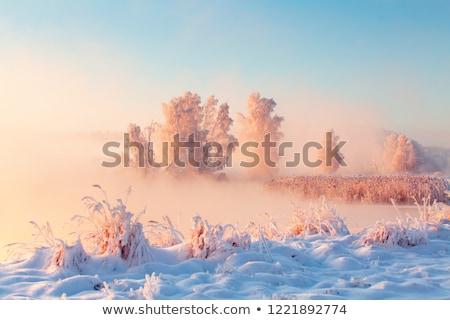 зима · утра · пейзаж · гор · свежие · снега - Сток-фото © Kotenko