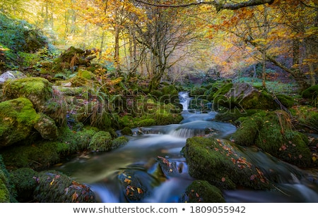 outono · cachoeira · montanha · mata · rochas - foto stock © jarin13