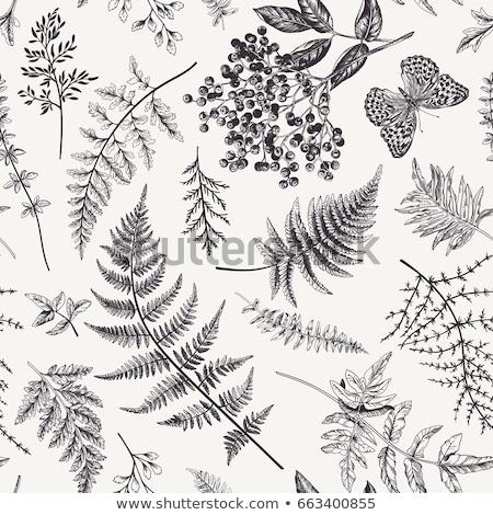 Autumn forest with ferns Stock photo © Kotenko