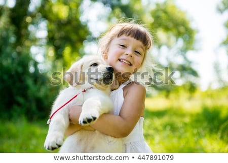 portrait of little girl playing with puppy of golden retriever stock photo © phbcz