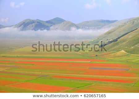 morning fog at piano grande castelluccio umbria italy stock photo © fisfra