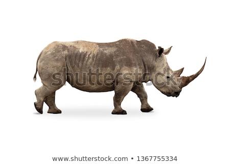 Side profile of a White rhino. Stock photo © simoneeman