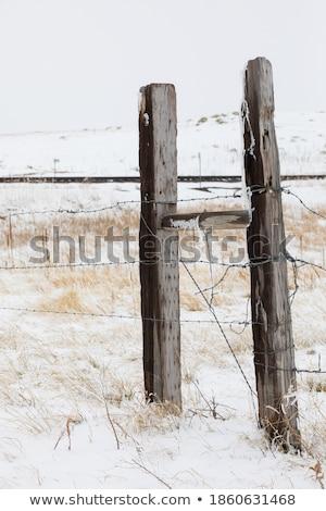 Dondurulmuş kar ahşap eskrim keskin Stok fotoğraf © backyardproductions
