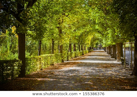 Bomen steegje mooie landschap midden Stockfoto © meinzahn
