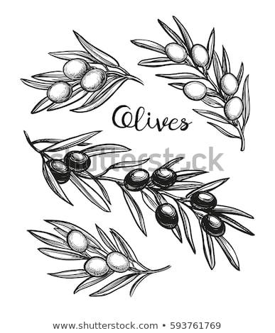 Aceitunas negras mano alimentos frutas salud fondo Foto stock © inaquim
