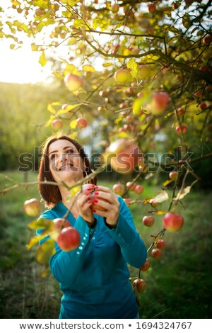Young girl picking out apples at a farmer's market Stock photo © jarenwicklund