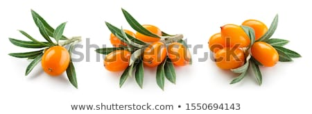 Branches of sea buckthorn Stock photo © ptichka
