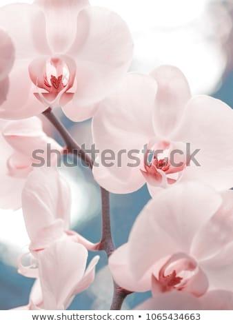 Foto d'archivio: Bella · donna · orchidea · fiore · foto · donna · ragazza