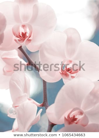 Stockfoto: Mooie · vrouw · orchidee · bloem · foto · vrouw · meisje