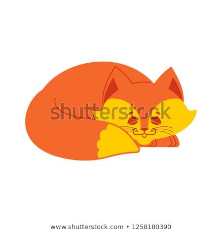 Sleeping fox isolated. asleep wild beast on white background Stock photo © popaukropa