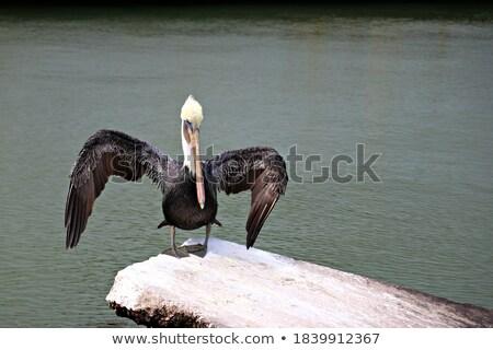 назад · выстрел · рыбы · морем · рыбалки · животного - Сток-фото © eh-point
