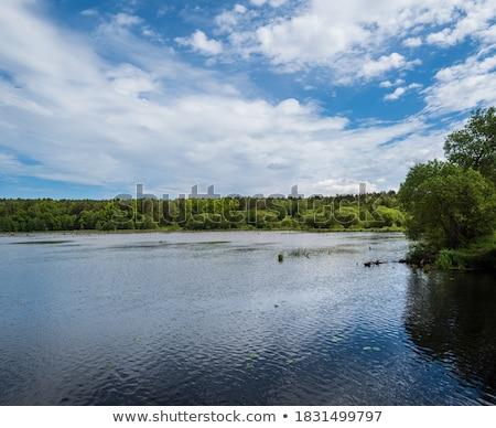 yaz · göl · görmek · bitkiler · su · yüzeyi · su - stok fotoğraf © wildman