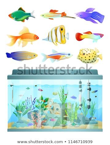 Hatalmas akvárium különböző halfajok szett színes Stock fotó © robuart