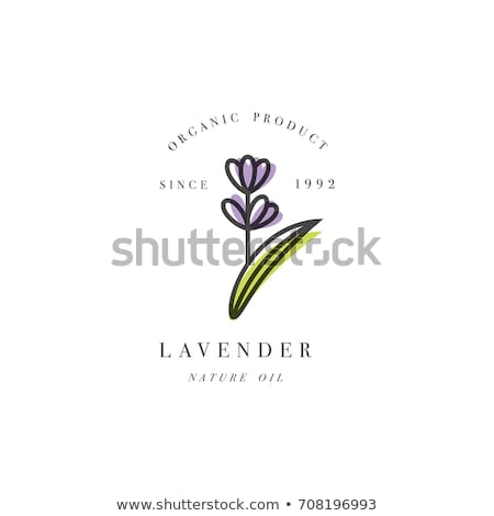 flower violet linear style Icon Stock photo © Olena