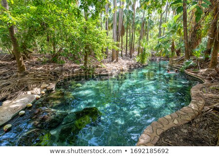 underwater in tropical hot climate Stock photo © ssuaphoto