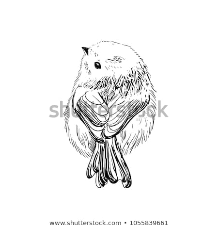 Hand drawn vector illustration. Sketch birds. Ink drafts bird. Engraving birs. Black and white. Isol Stock photo © bonnie_cocos