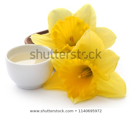 Flower daffodil with extract in a bowl Stock photo © bdspn