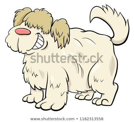 cute shaggy beige dog cartoon character Stock photo © izakowski