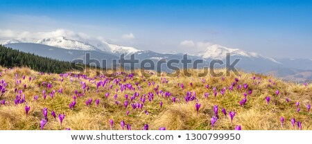 spring landscape with snow stock photo © jossdiim