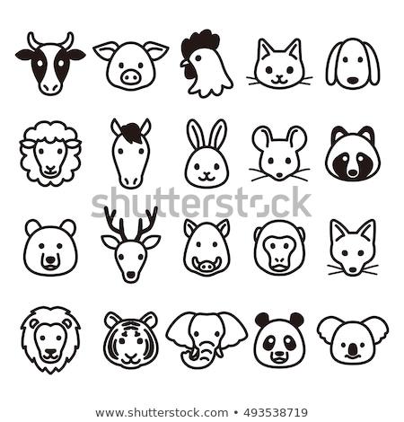 Farm állatok ikon szett vektor fej illusztráció szett Stock fotó © nosik