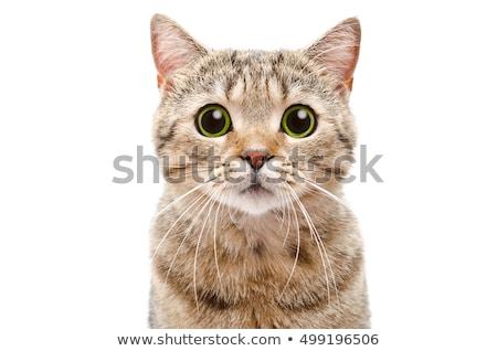 meraklı · beyaz · kedi · yeşil · sevimli · oynama - stok fotoğraf © unweit