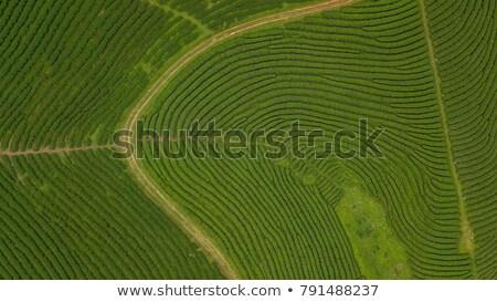 aerial view of tea plantation shot from drone stock photo © galitskaya