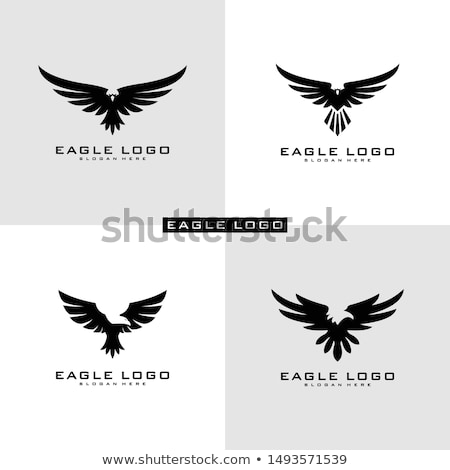 Set of eagles Stock photo © netkov1
