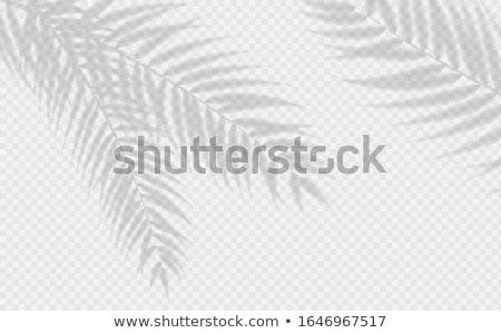 árnyékok trópusi pálmalevelek trendi kreatív papír Stock fotó © furmanphoto