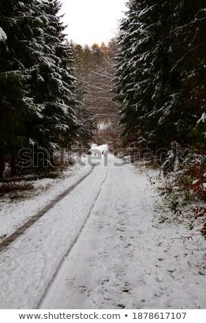 Onverharde weg pine bos sneeuw gedekt winter Stockfoto © lovleah