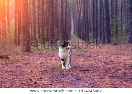 Red cat on a dirt road. Domestic red white cat Stock photo © galitskaya