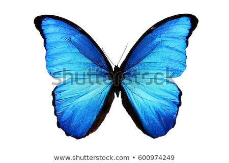 青 · 蝶 · 緑色の葉 · 翼 · 目 · デザイン - ストックフォト © alessandrozocc